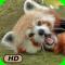 A+ Animal Babies HD