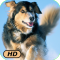 A+ Animal Antics HD