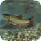 Brook Trout Live Wallpaper
