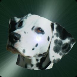 Dog & Puppy Quiz