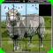 Magic Slide Puzzle - Domestic Animals 1