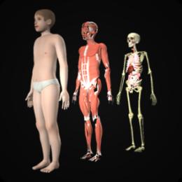 Drill Down Child Anatomy by WAGmob