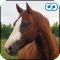 Name That Horse (Horse and Pony breed triva game)
