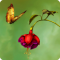 Hidden Garden Paradise: A Hidden Objects Game