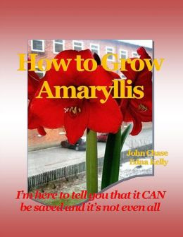 How to Grow Amaryllis