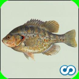Name That Fish