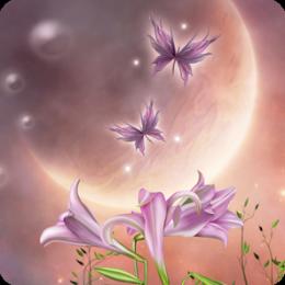 Hidden Garden Midnight