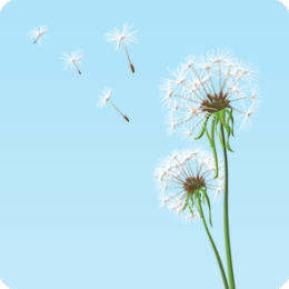Dandelion Breeze HD Live Wallpaper