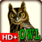 Audubon's Owls Live HD+ Wallpaper Gallery