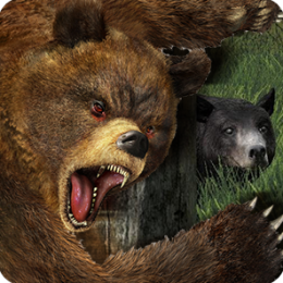 Life Of Bear