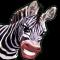 Magic Boox: Jungle Safari