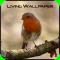 Living Wallpaper - Robin