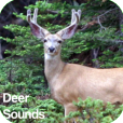 Product Image. Title: Deer Sounds