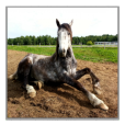 Product Image. Title: 200 Horse Wallpapers