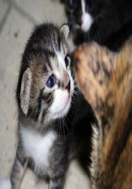Animals: Amazing Animal Cutest Babies 4 ( nature children, amazing animals, cutest animals, cute animals, kittens, puppies, baby animals, wild, forest, beast, animals, animal books, animal picture books, kids books )