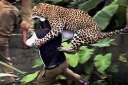 Best of Animal Attacks! Photography Book ( spiders , tarantula , sea, creature, sea world, underwater world, horse, wild, forest, beast, animals, elephant, photo, fish, wildlife, ocean, shark, octopus )