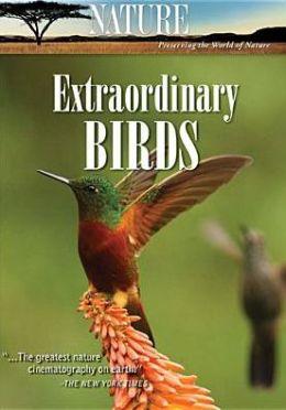Nature: Extraordinary Birds (6pc)