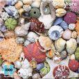 Product Image. Title: 1000 Piece Seashore Puzzle
