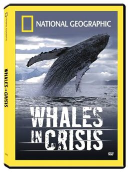 National Geographic: Whales in Crisis