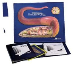 Hubbard Scientific 2756 Earthworm Model Activity Set