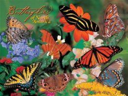 Impact Photographics IMP5282184S Puzzle Butterflies