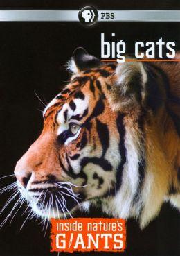 Inside Nature's Giants: Big Cats