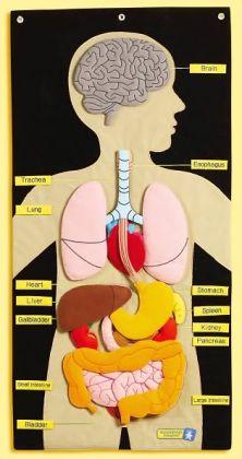 My Body Activity Center