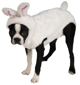 Bunny Pet Costume: Medium