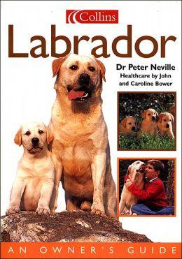 Dog Owner's Guide: Labrador