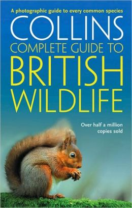 British Wildlife: A Photographic Guide to Every Common Species