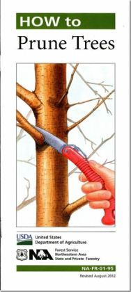 How to Prune Trees