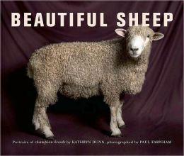 Beautiful Sheep: Portraits of Champion Breeds