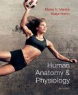 Book Cover Image. Title: Human Anatomy & Physiology with MasteringA&P, Author: Elaine N. Marieb