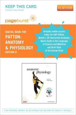 anatomy midterm essay questions