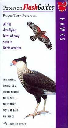Hawks: All the day-flying birds of prey seen in North America