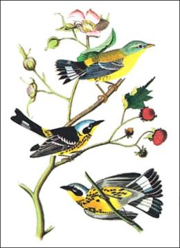 Audubon Bird Notebook