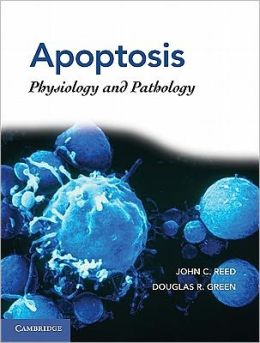 Apoptosis: Physiology and Pathology