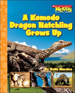 A Komodo Dragon Hatchling Grows Up