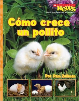 Como crece un pollito: A Chick Grows Up