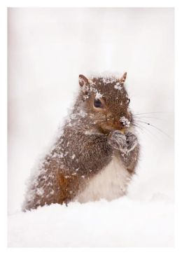Squirrel In Snow Christmas Boxed Card