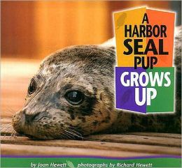 Harbor Seal Pup Grows Up