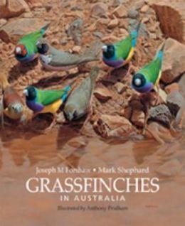 Grassfinches in Australia
