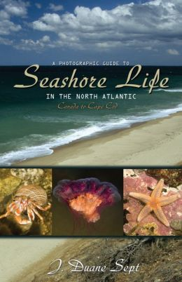 A Photographic Guide to Seashore Life in the North Atlantic: Canada to Cape Cod