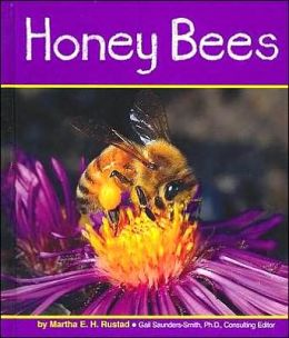 Honey Bees (Insects Series)