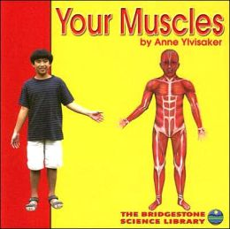 Your Muscles