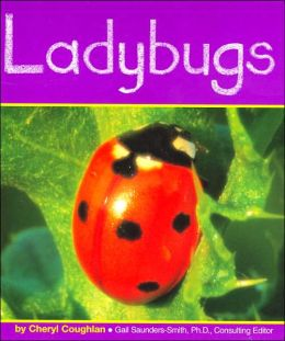 Ladybugs (Insects Series)