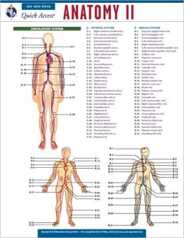 Quick Access: Anatomy 2