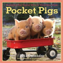 2012 Pocket Pigs: The Teacup Pigs of Pennywell Farm Wall Calendar