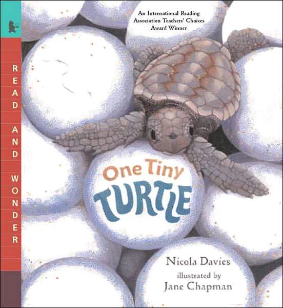 Free pdf and ebooks download One Tiny Turtle DJVU PDB iBook by Nicola Davies in English