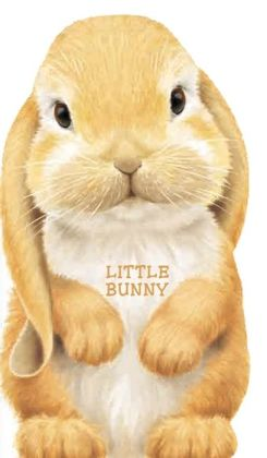 Little Bunny (Look at Me Books Series)